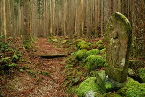 One of the network of pilgrimage trails in the Kii Mountains, known collectively as the Kumano Kodo. Photo courtesy of Brad Towle.